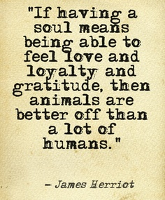 animal soul quote