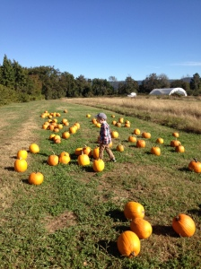 Pumpkin Patch 2014 008